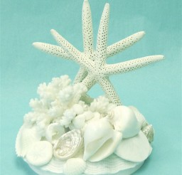1024x1178px Wedding Cake Topper With Starfish Shells Picture in Wedding Cake